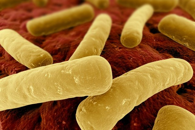 Clostridium difficile to be treated using fecal transplants
