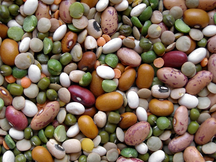 Scientists breed heat tolerant beans to endure with global warming