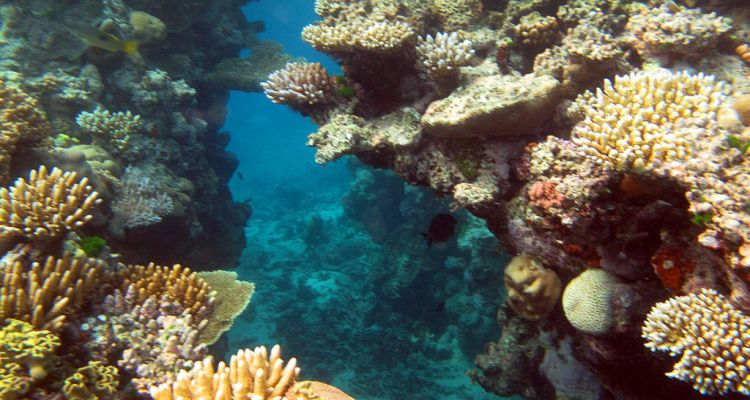Researchers Identify Source Reefs That Could Aid In