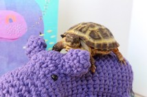 Plus, the purple goes well with all the gold on my shell, right, Mom?