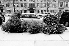 treemobile