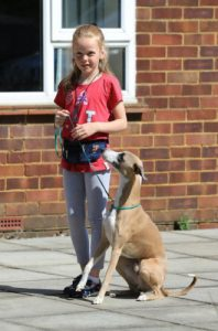 Young girl with whippet