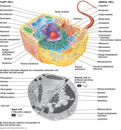 observing the different types of the eukaryotic cells thewhyinbiochemistry [ 960 x 998 Pixel ]