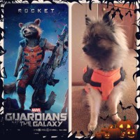 Rocket Raccoon Costume | The Wicked Pup