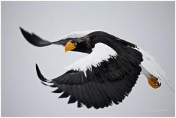Hokkaido Eagles 18