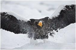 Hokkaido Eagles 8