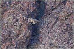 Ladakh 4