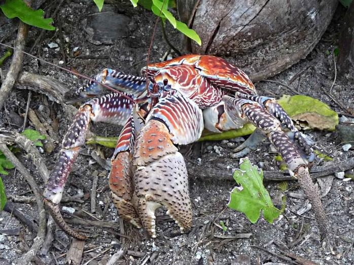 crab-649568_1920