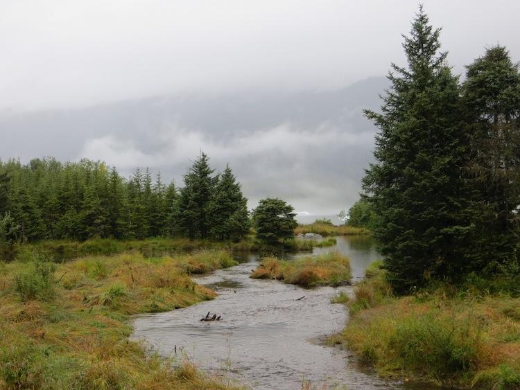 nugget creek near Juneau Alaska