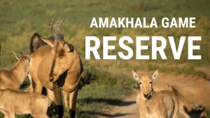 Amkhala Game Reserve