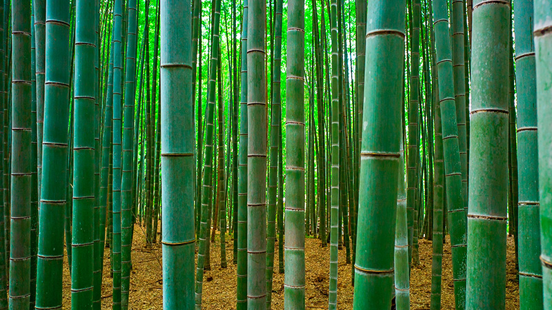 OPINION BAMBOO TAKING ROOT IN AFRICA  THEWILL