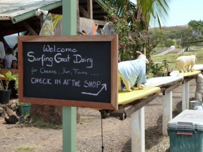 Welcome to Surfing Goat Dairy