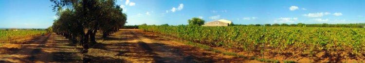 Classic red  terra rossa  sandy soils of Cerasuolo di Vittoria at Feudo di Santa Tresa Vineyards