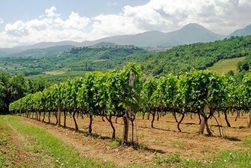 Naoussa Wine Region, Greece - The Wine Beat