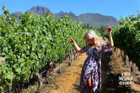 Haskell-Vineyards-wine-and-mountains