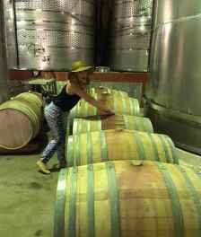 zandvliet wines cellar