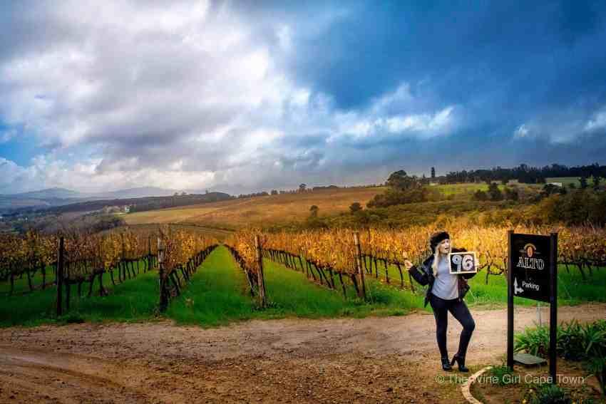 Alto Wines Stellenbosch_4544