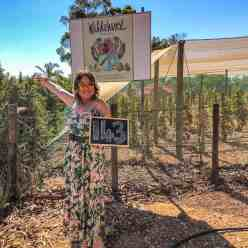 Wildehurst Wines the wine girl cape town