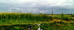 Bicycling through the Loire, part 2