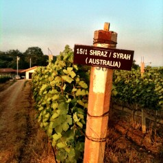 A visit to Thai winery, Granmonte Family Vineyard