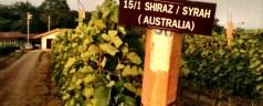 A visit to Thai winery, Granmonte Family Vineyard