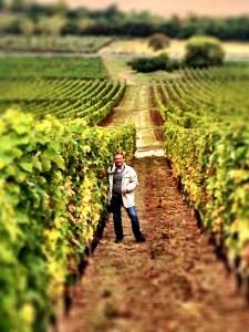 Laszlo amongst the vines