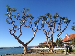 Seaport Village, 15 min walk away