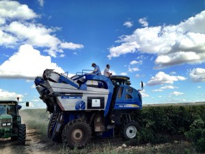 the harvester at work