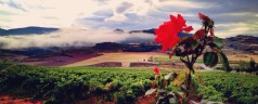 Navarra – A Wine Region of Diversity