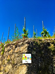 the terroir of Hermitage, Rhone Valley, France, wine, vineyards