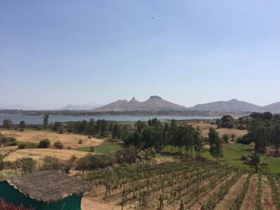 the vineyards of Vallone Vineyards, winery, Nashik Valley, Maharashtra,,India, Indian Wine