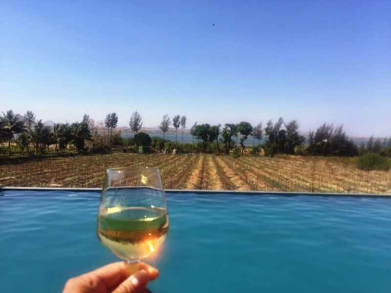poolside, white wine with a view of the vineyards,  Soma Vineyards and Resort, Nashik Valley, Maharashtra, India