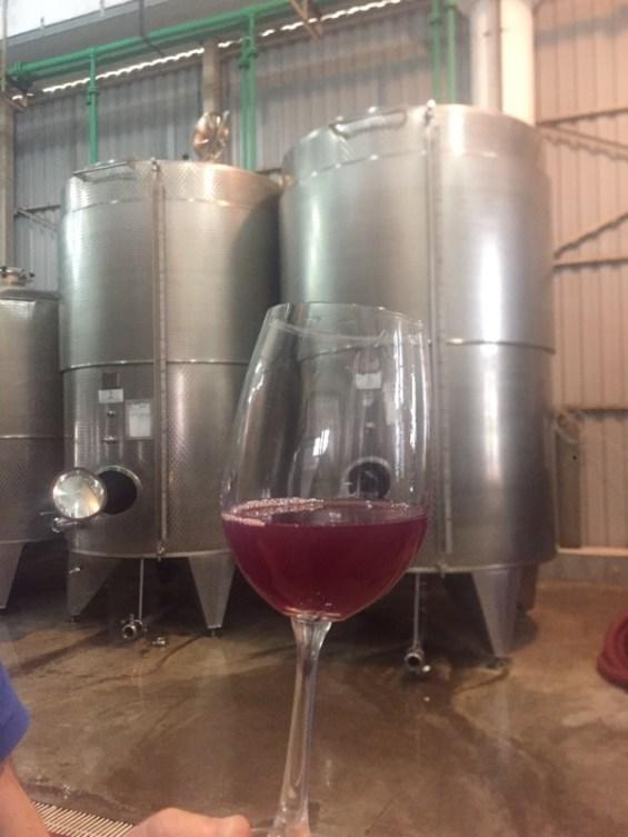 Reveilo Winery, fermenting wine, Nashik Valley, Maharashtra, India, Indian WIne