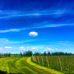 A visit to English Vineyard, Albourne Estate