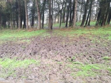 Eglington mud run