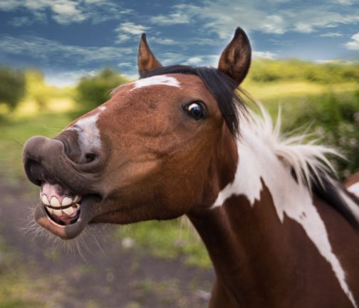 close-up photography of brown horse humor