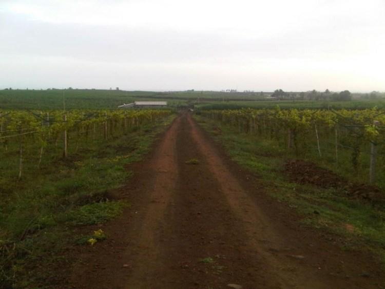 A view of the village landscape in north Karnataka where Amit Vaidya's healing process began. Source: Amit Vaidya