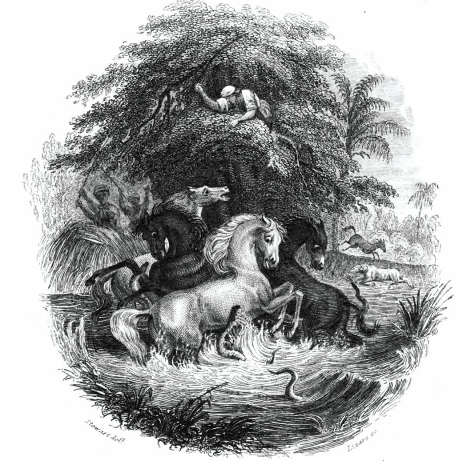 Illustration depicting the battle between eels and horses. It was published in 1843, authored by Robert H. Schomburgk, a friend and protégé of Humboldt's. Source: PNAS