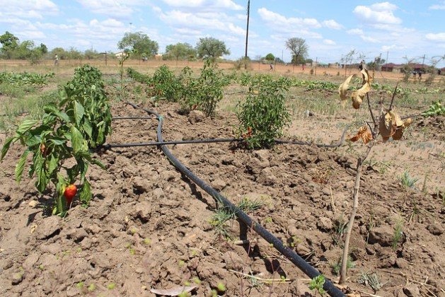 south-africa-drought-640-629x420