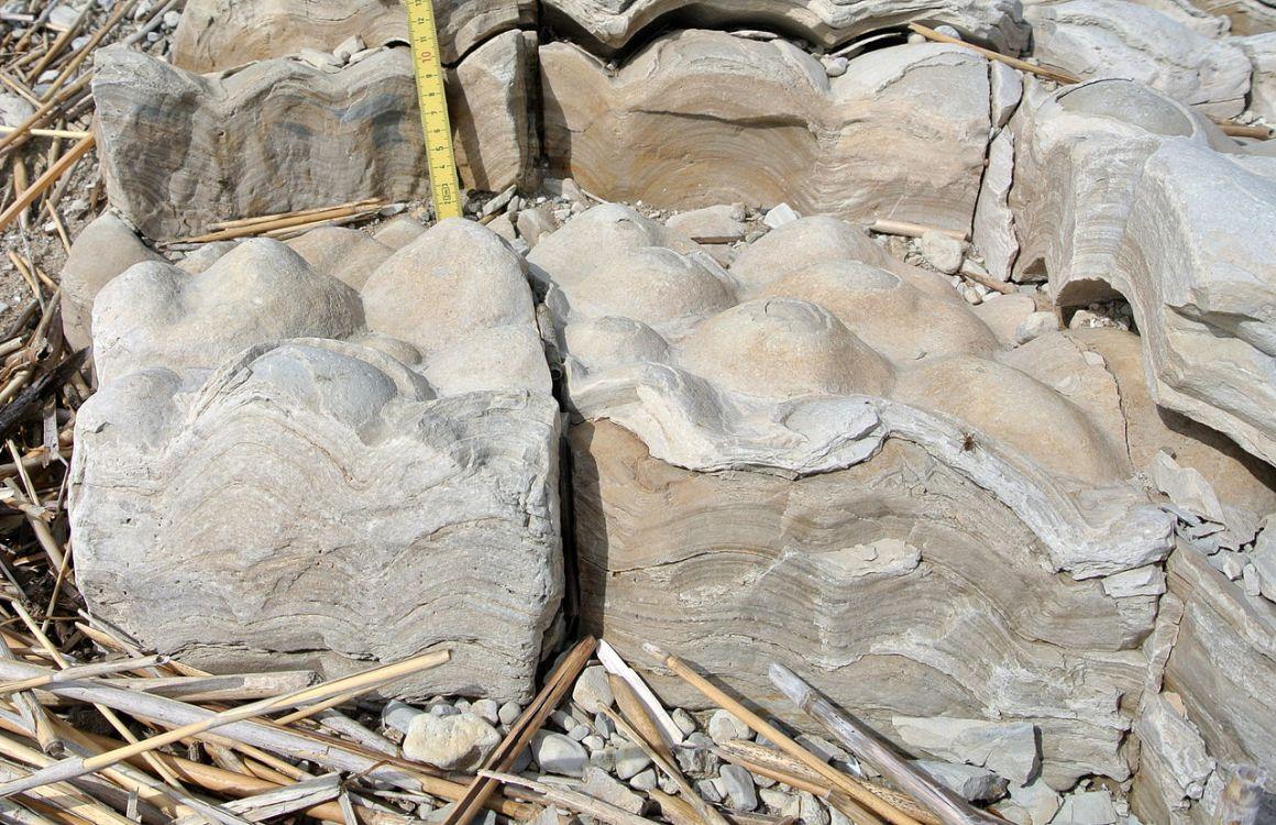 World S Oldest Fossils 3 7 Billion Years Old Found In