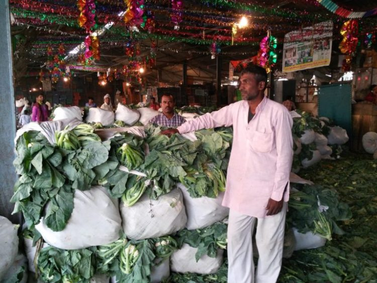 Jitender Chowdhary, the cauliflower farmer from Haryana. Credit: Ajoy Ashirwad Mahaprashasta.