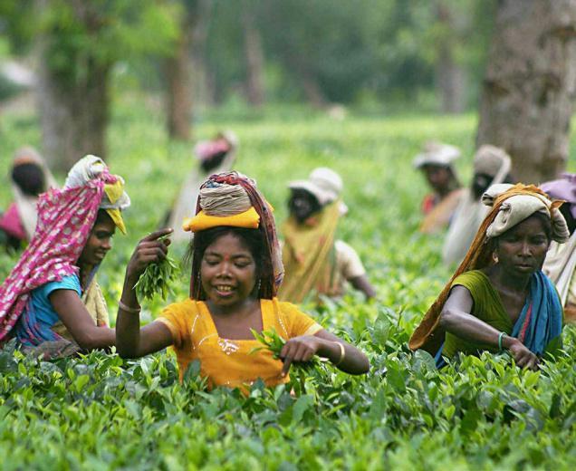 Tea garden labourers. Credit: PTI/Files