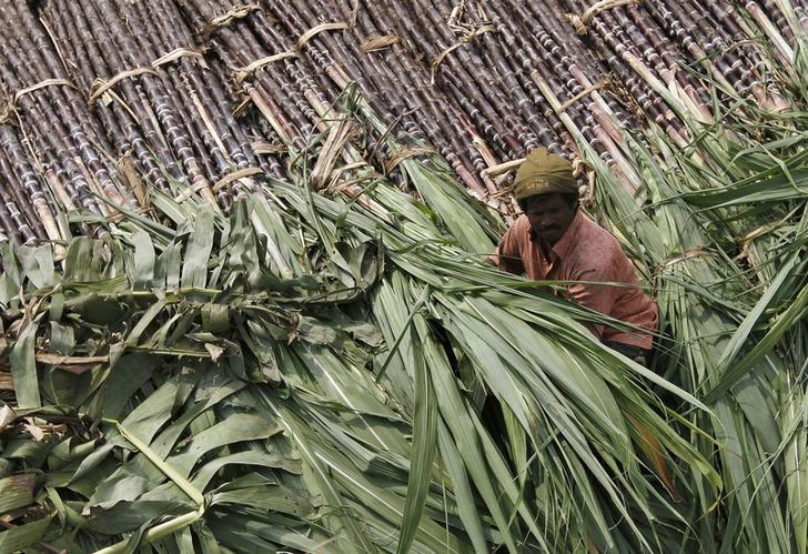 A trader sits on a pile of sugarcane as he waits for customers at a wholesale market in Chennai January 12, 2014. Credit: Reuters/Files