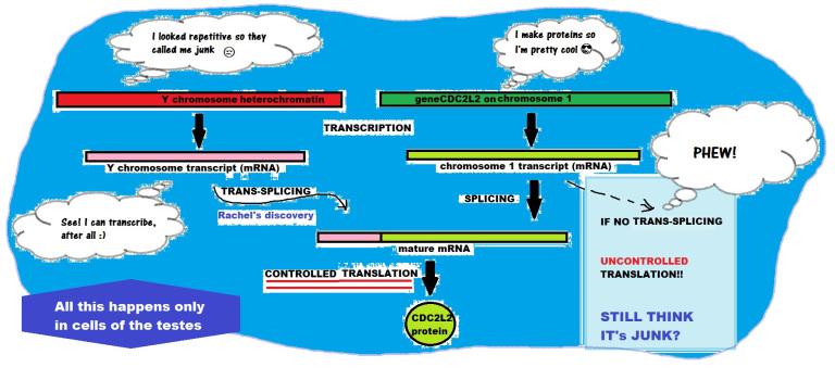 ed-schematic