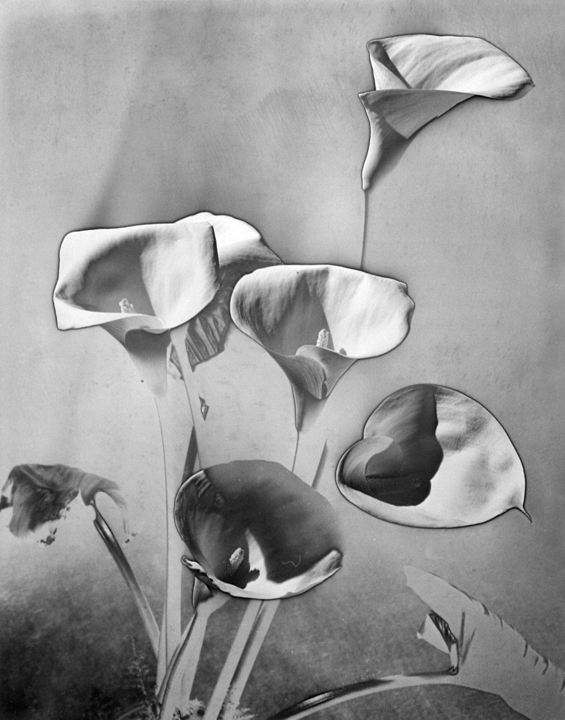 Les Arums c. 1930 Gelatin Silver print (Estate print) 30 X 24 cm © Man Ray Trust – ADAGP / courtesy MONDO GALERIA | TARQ