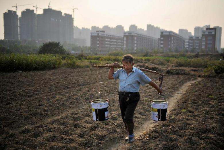 A man carries buckets of water at a vegetable field, near a new residential compound, in Hefei, Anhui province, China, November 13, 2013. Credit: Reuters/Stringer