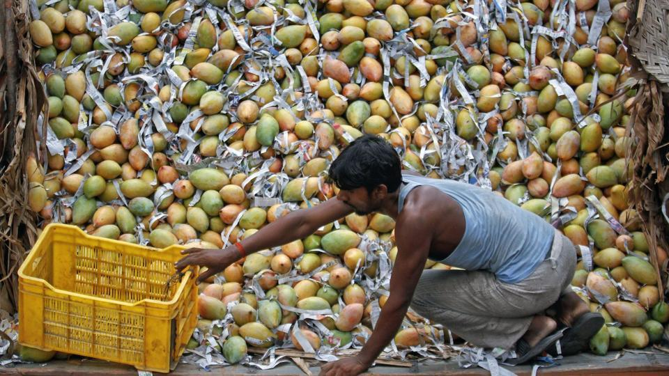 The most frequent use of mangoes in fiction is as a succulent emblem of longings, yearnings and revelations, both physical and metaphysical. Credit: Reuters