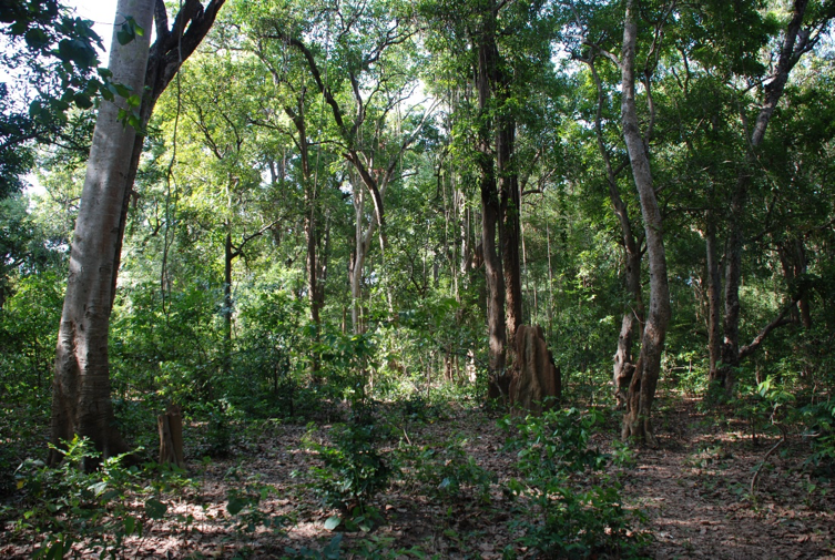 One of the largest sacred groves in Bastar. Credit: Madhu Ramnath