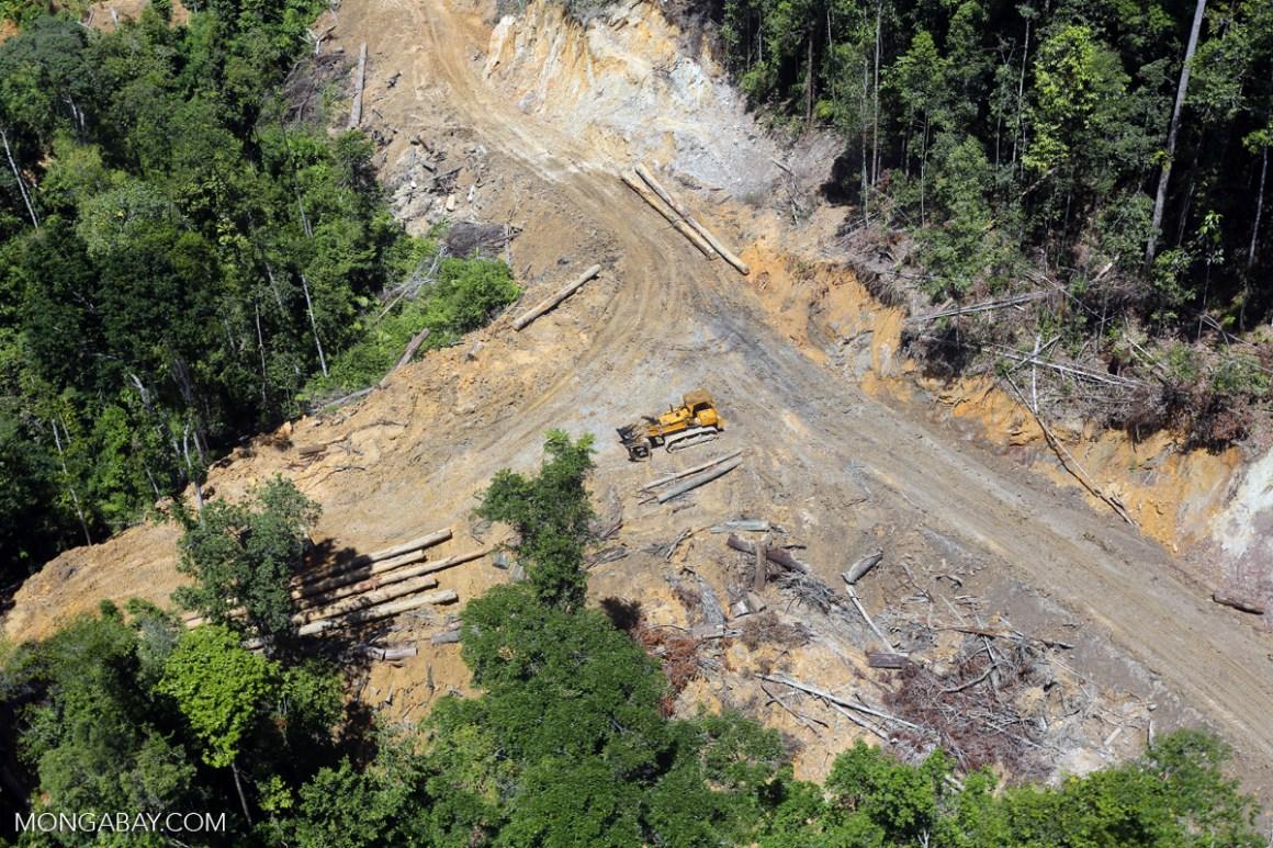 A logging road cuts through a tropical forest in Borneo. Credit: Rhett A. Butler