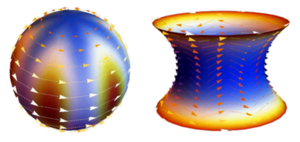 Flocking behaviour around a sphere and a catenoid. Credit: APS, CC BY 4.0